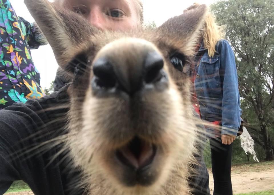 kangaroooooo